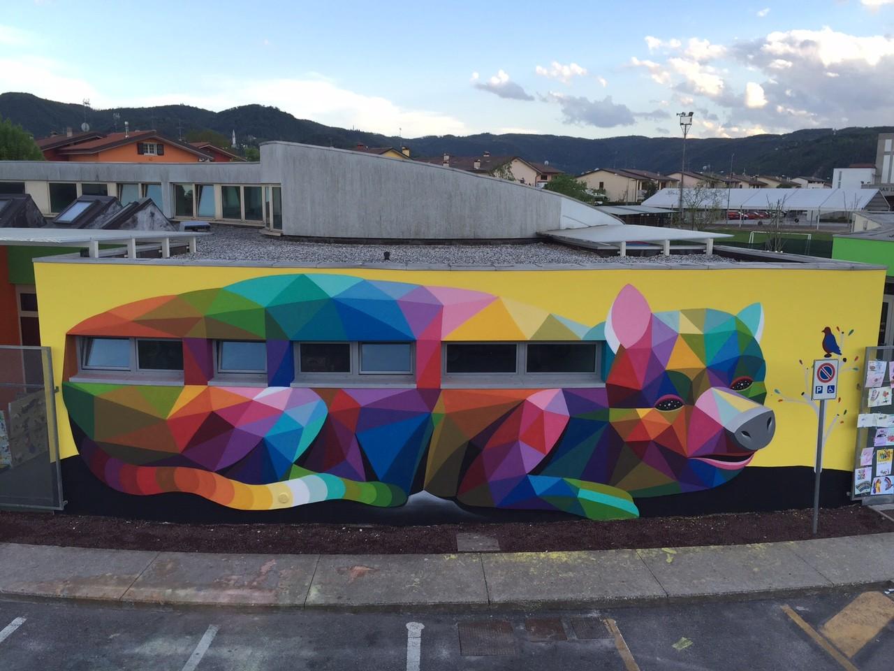 Maiagatto di Vicenza3