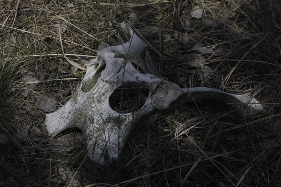 guido-van-helten-chernobyl-5